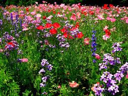 native nc plants north carolina and duke gardens carolyn u0027s shade gardens