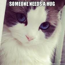 Cat Hug Meme - someone needs a hug make a meme