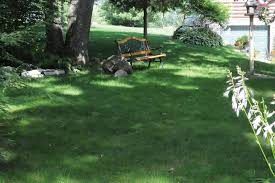 no mow grass grass alternatives houselogic lawn tips