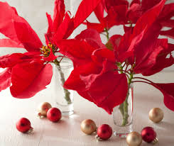 14 creative ways to decorate with poinsettias u2013 for her