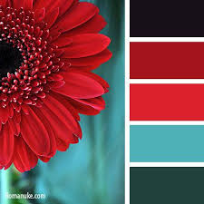 Colors That Go With Red Best 25 Aqua Color Schemes Ideas On Pinterest Turquoise Color