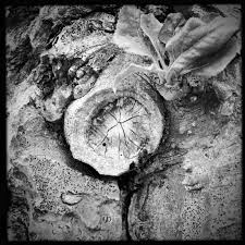 Coupon Code Home Decorators by Tree Portraits From Around The Bay For Cees Black And White Hipsta