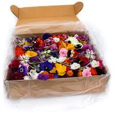 edible flowers for sale the secret garden order secret garden edible flowers