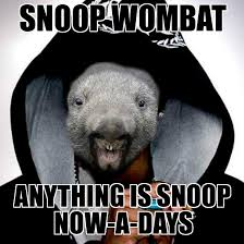 Wombat Memes - snoop wombat snoop wombat anything is snoop now a days weknowmemes
