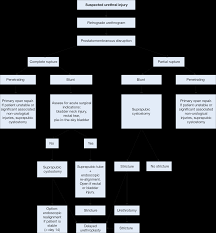 Perineal Dissection Of Synchronous Abdominoperineal Urological Trauma Eau Guidelines 2016 3 4 Urolog Poznań