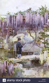 colourful hanging wisteria japanese garden in japan wisreia is