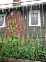the tacoma kitchen garden journal mid may garden update