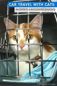 Colorado traveling with cats images Best 25 traveling with cats ideas traveling with jpg