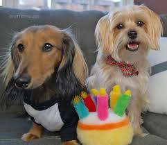 dog birthday party rambo s dog birthday party rambo the puppy