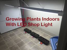 hyperselect led shop light growing plants inside with led shop light youtube