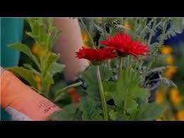 garden tips the best quick growing flowers for a cutting garden