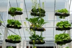 vertical garden ideas agnet west