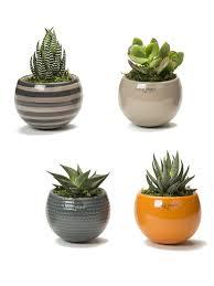 nordic mini magnet succulent garden set of 3 inspiration