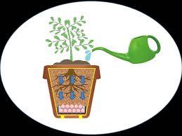 Diy Self Watering Herb Garden Diy Self Watering Planter Pot Subterranean Water Reservoir Youtube
