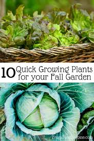 fall gardening great plants to grow in the fall