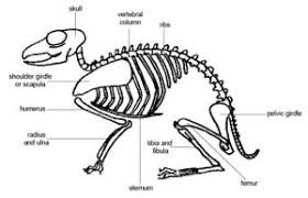 Anatomy And Physiology Of The Back Back Pain In Animals Saratoga Spine