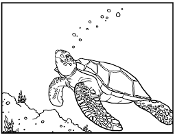 realistic sea turtle coloring pages to print coloringstar