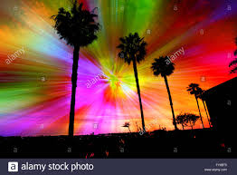 silhouette of palm trees against a star burst of rainbow colors