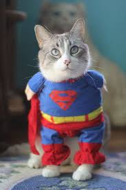 Funny Halloween Costumes Cats 291 Dogs Wearing Costumes Images Animals