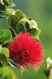 Hawaiian Flowers And Plants - best 25 hawaiian flowers ideas on pinterest flowers beautiful