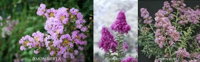 flowering trees san jose payless hardware rockery u0026 nursery