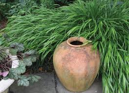 ornamental grasses for shady spots american nurseryman
