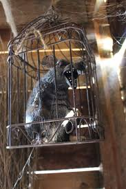 halloween busts 189 best rats bats spiders snakes spider webs images on