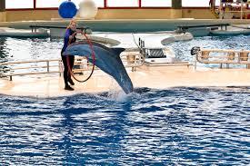 baltimore aquarium s dolphin show raoul pop