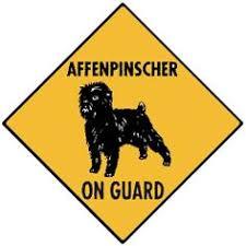 affenpinscher with underbite affenpinscher underbite funny puppy oh that face pinterest
