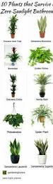 houseplants that live without sunlight home and garden
