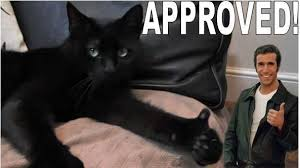 Approved Meme - image 103514 thumbs up cat know your meme