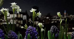this incredible flower timelapse took 3 years and 8tb of photos to
