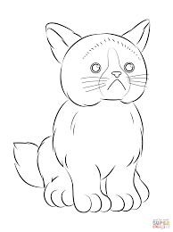 cats to color beautiful grumpy cat coloring pages coloring page