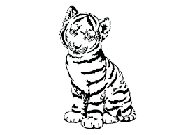 snow tiger coloring page sabre tooth tiger drawing at getdrawings com free for personal use