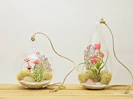 bliss gardens air plant terrarium combo set with 4
