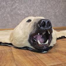 polar bear taxidermy rug for sale 12330 the taxidermy store