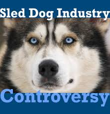 the sled dog industry controversy dog yearbook blog