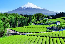 the beautiful landscape of mount fuji