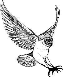 bird of prey clipart line art pencil and in color bird of prey