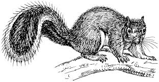 squirrel 2 clip art download