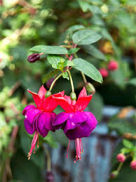 heat loving plants top annual flowers to grow in the shade