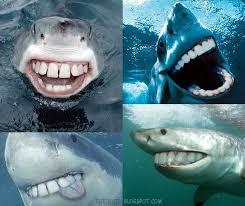 film kartun ikan hiu ikan hiu bergigi lucu gambar meme lucu