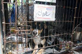 photo gallery banfield comes to the aid of pets in puerto rico