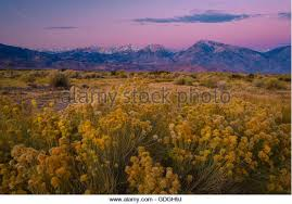 Nevada vegetaion images Sierra nevada vegetation stock photos sierra nevada vegetation jpg