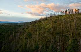 with climate change tree die offs may spread in the west the