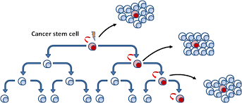 cancer stem cell wikiwand