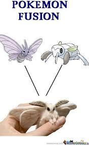 Moth Meme - venocada by thechaoscauser meme center