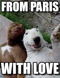 From Paris With Love Meme - from paris selfie dogs meme on memegen