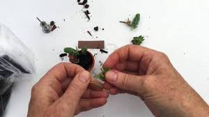 cute how to make a miniature succulent garden or a tiny mini