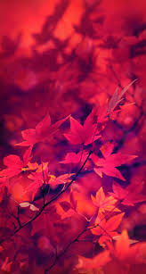 61 best colored and nature images on pinterest wallpaper